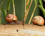 Macro/Close Up Competition - Snails © Mark-Johnston